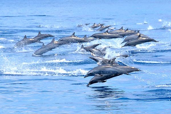 dolfijnen kalpitiya